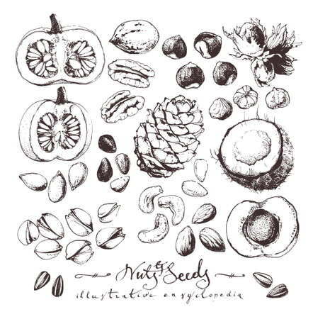 Vintage drawings of nuts and seeds, ink drawn food illustrations