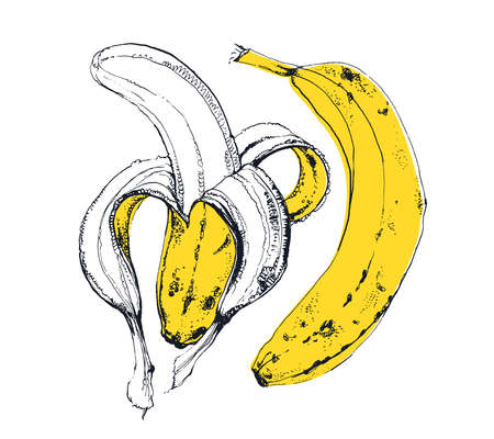 Hand drawn illustration of gorgeous yellow banana fruit, ink drawings isolated on white