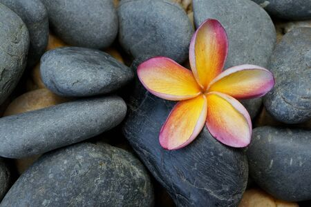 Plumeria flower on black stone