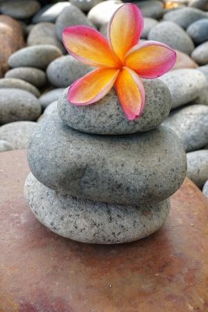 Tropical frangipani on grey stone