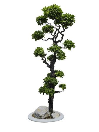 ebony tree: Ebony tree