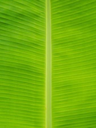 original ecological: closeup banana leaf background Stock Photo