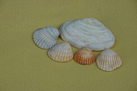 hard coral: Set of seashells on the yellow light brown background