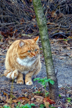 Ginger cat sitting on the ground near a thin tree