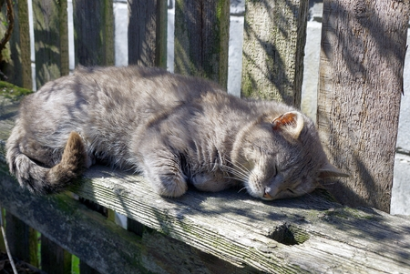 Gray cat sleeping on a wooden bench