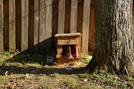 Dog house near the fence Stock Photo