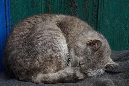 Gray cat sleeps on a rug near a green wall