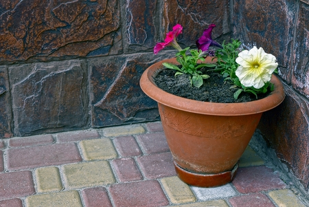 Decorative flowers in a clay brown pot Фото со стока