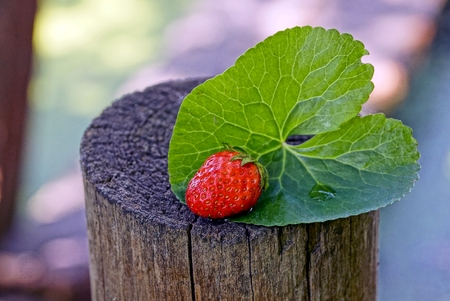 A red strawberry on a green leaf on the stump