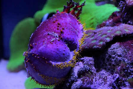 lia: Plants and animals on the seabed in the aquarium