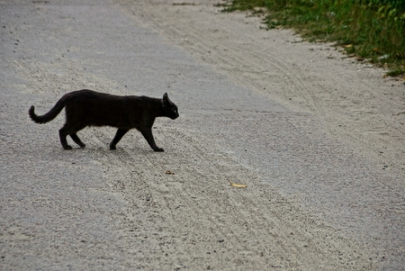 Gato negro cruzando carretera asfaltada en la calle. Foto de archivo - 83423728