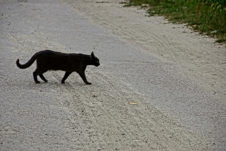 Black cat crossing asphalt road in the street Standard-Bild