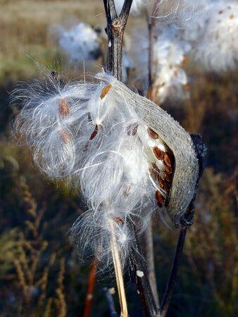 Pappagallo bianco con semi da un germoglio Archivio Fotografico - 83649513