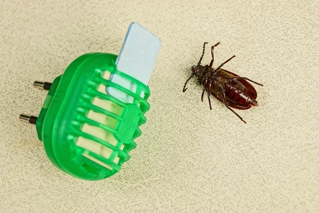 fumigador: Electric insect repeller and dead brown beetle