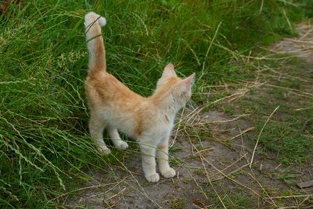 나가서는 작은 고양이 녹색 잔디에서도 의미합니다.