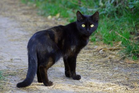 A black cat stands on the road near a green grass