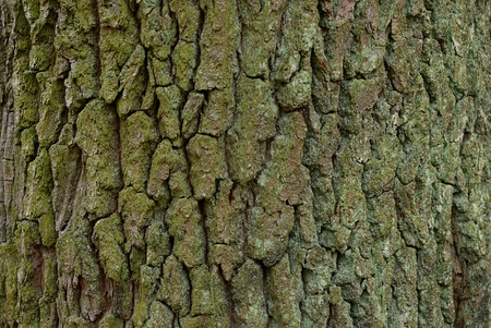 part of a big tree with a green bark Stock Photo