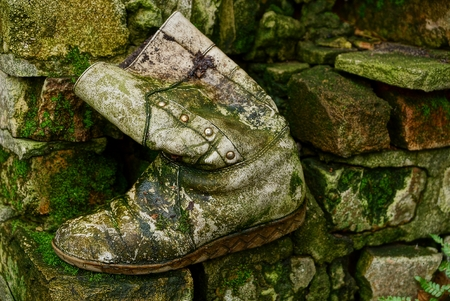 Old gray boot overgrown with moss in the mud on the rocks