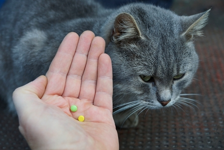 two colored pills on the palm and a gray cat Standard-Bild