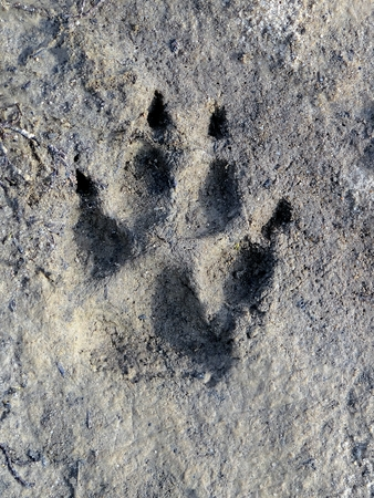 A trace in the clay of an animal