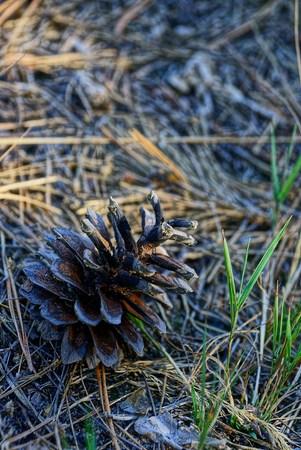 big brown dry lump on the ground Stock Photo