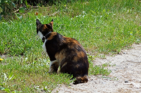 spotted cat sitting on the street in green grass Banco de Imagens