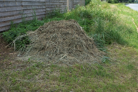 little hay of dry hay in the green grass by the fence Stock Photo