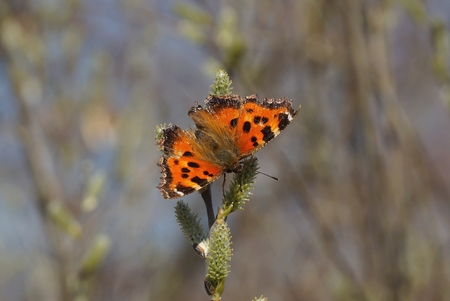 beautiful colored butterfly sitting on a branch in nature Stock Photo