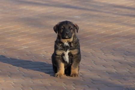 little brown puppy sitting on the sidewalk