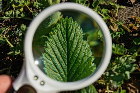 magnifier over nature Stock Photo