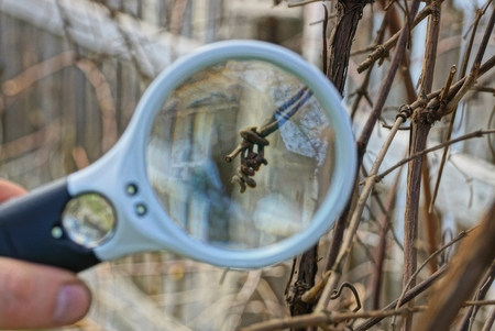 white magnifier increases dry brown plant in nature