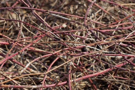 dry red wood branches