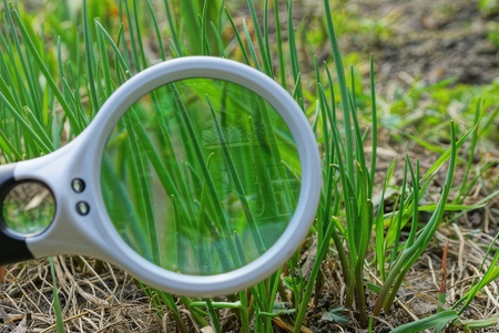 white magnifier increases green grass in nature Stock Photo