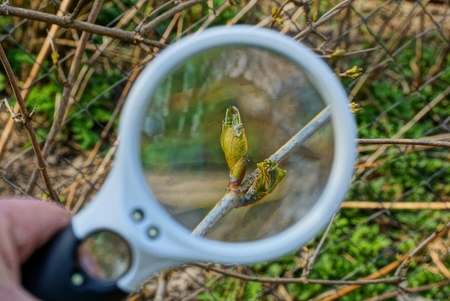 magnifier enlarges