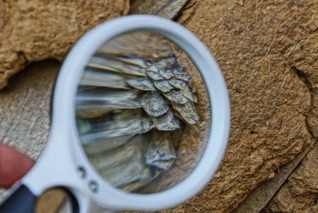 white loupe magnifies a dry gray bump in brown clay Stock Photo
