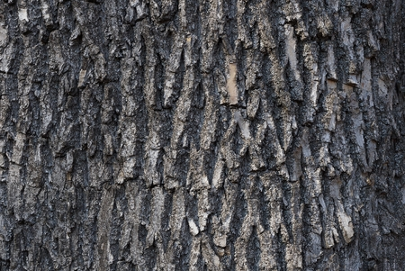 gray natural bark texture on the tree