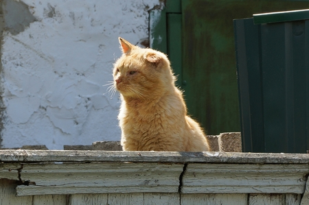 big red cat sitting on a street