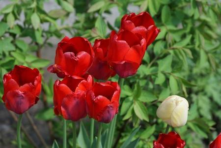 red garden in spring garden