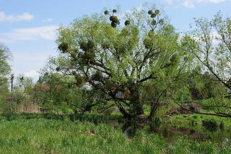 big green tree Banco de Imagens