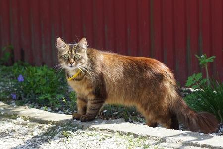 green cat stands