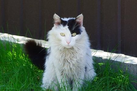 a big fluffy spotted cat outside Banco de Imagens