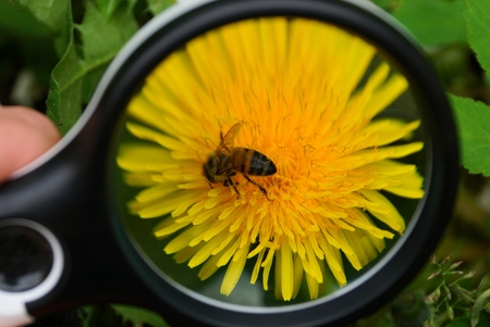 yellow flower magnifier increases in size