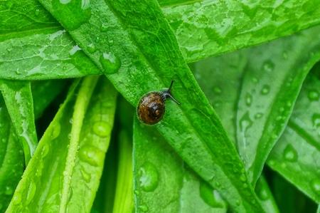 one brown little leaf drops on water Stok Fotoğraf
