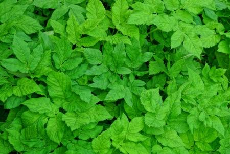 natural plant texture