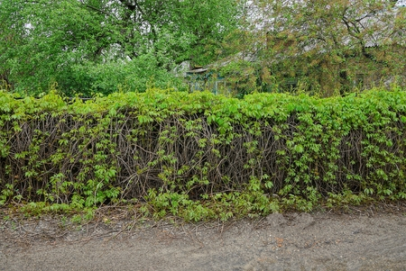 a long old fence