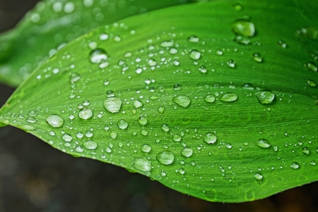 big green leaf with water drops 스톡 콘텐츠