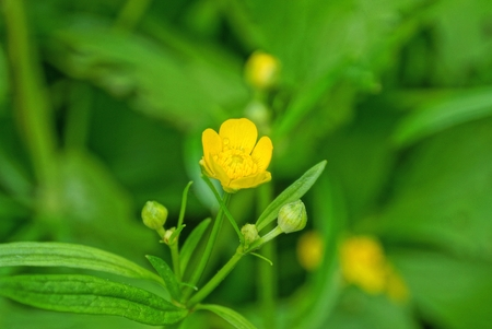 yellow flower on a green stalk with leaves in nature