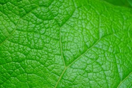 plant leaf Imagens - 124986333