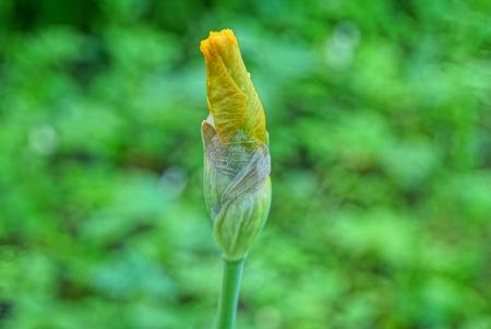 iris flower in the garden Standard-Bild - 124986529