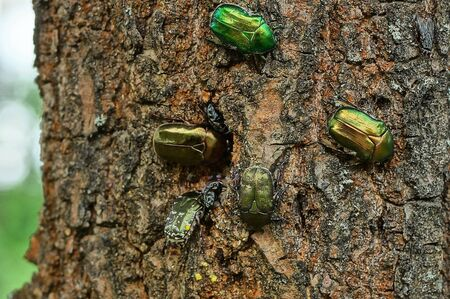 many green beetles are sitting in the forest 写真素材